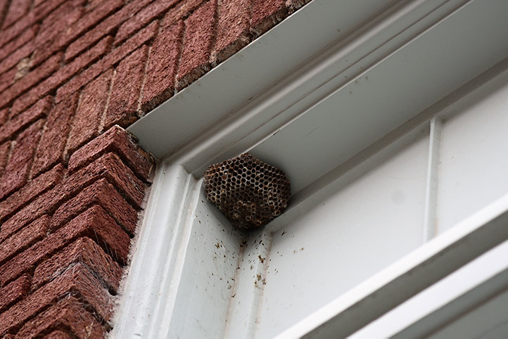 We provide a wasp nest removal service for domestic and commercial properties in Covent Garden.